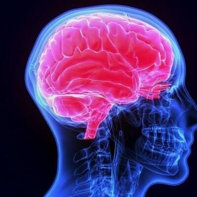 o-cerebro-e-a-memoria