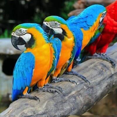 um-safari-portugues
